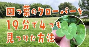 【四つ葉のクローバー】花言葉は?見つけ方・確率は?